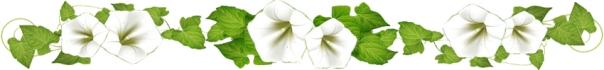 Frise fleur blanche 30-1