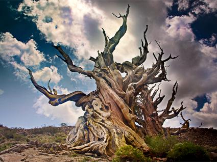 vieil arbre image